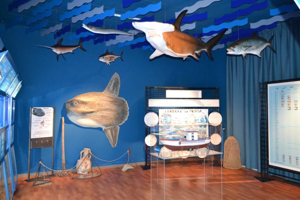 Il Museo di Biologia Marina a Porto Cesareo